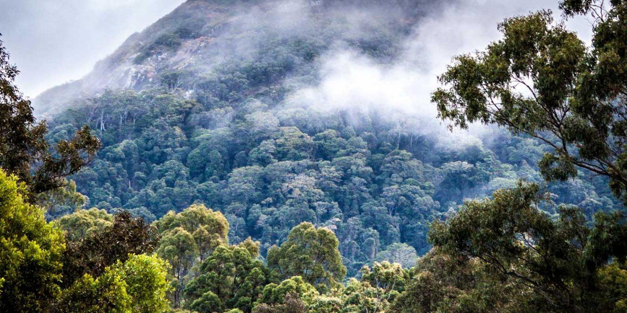 Report: Deforestation Still at Alarmingly High Levels