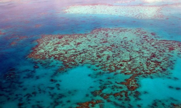 Global Warming is Killing the Great Barrier Reef – Study Finds