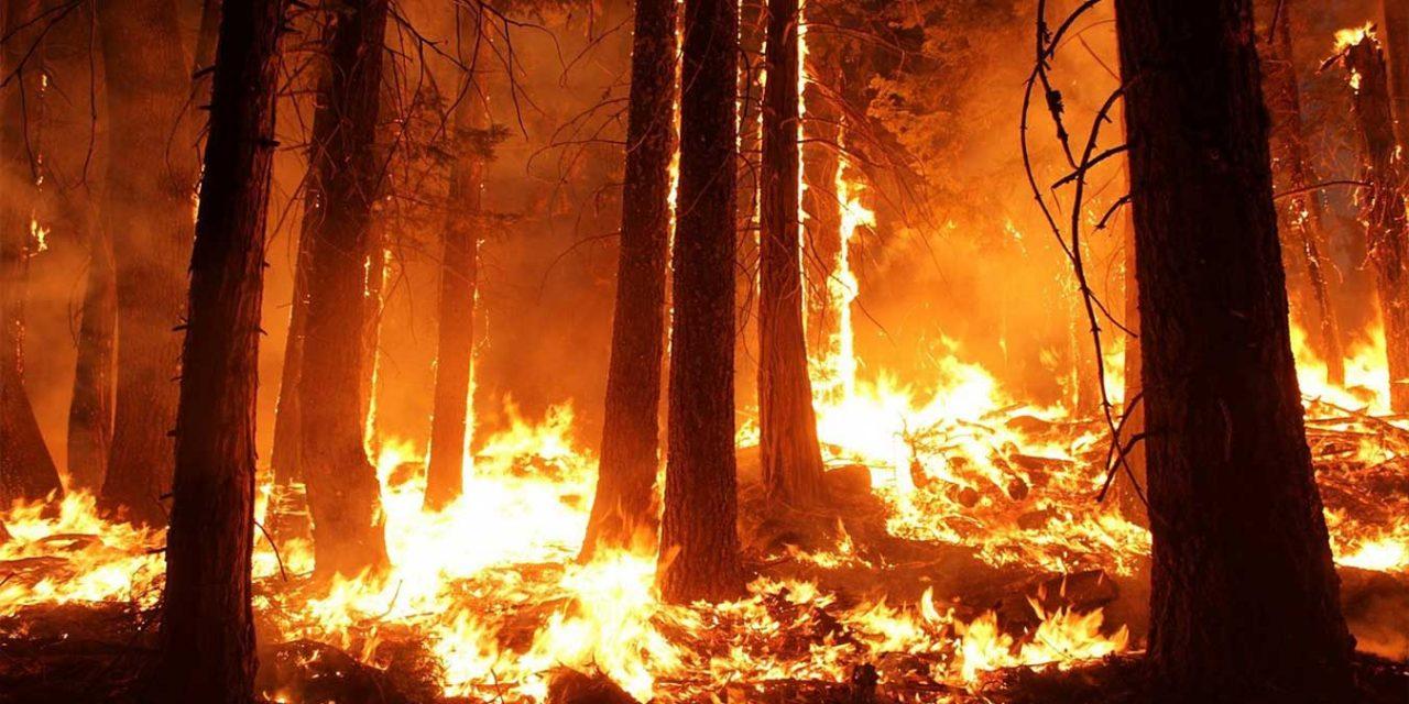 World Facing 'Climate Apartheid' According to UN Expert