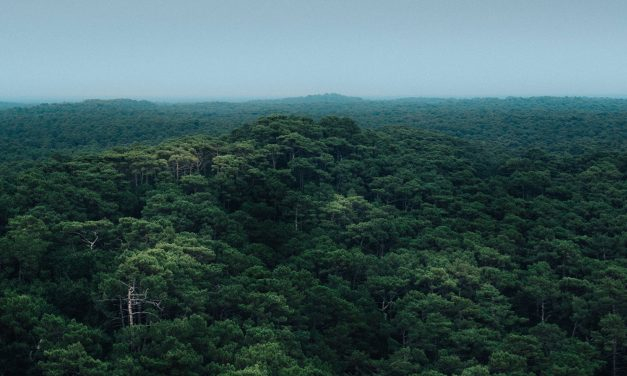 Deforestation of Amazon Already at Record High Under Bolsonaro's Leadership