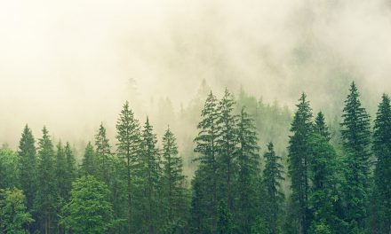 Planting up to a Trillion Trees Could Reverse Climate Change