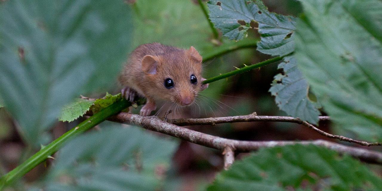 UK Wildlife in Terminal Decline