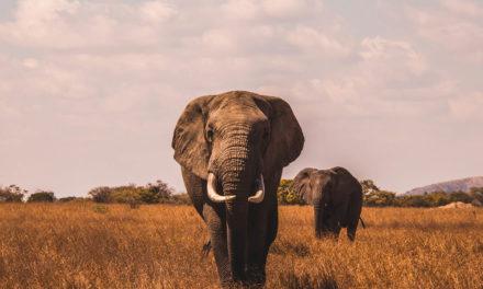 Zimbabwe Drought Impacts Humans and Wildlife Alike