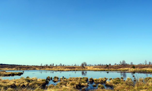 Europe's Peatlands Drying Out and Turning into Carbon Sources