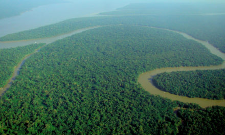 Deforestation in the Amazon Has Reached Soaring Levels Under Bolsonaro Government