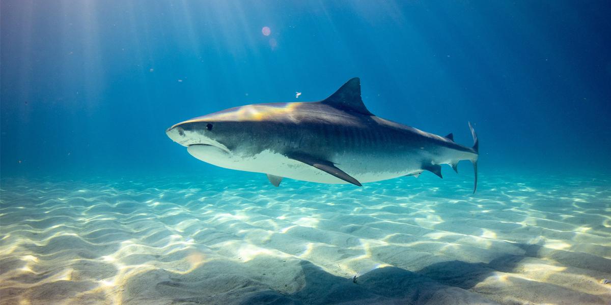 The Insidious World of Shark Finning