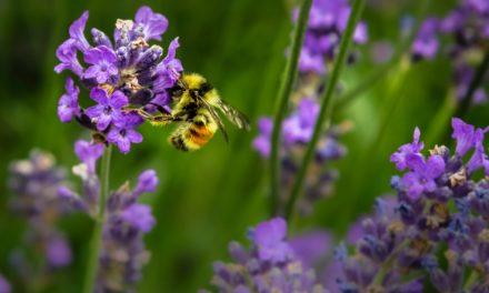 Air Pollution is Killing Honeybees, Scientists Reveal