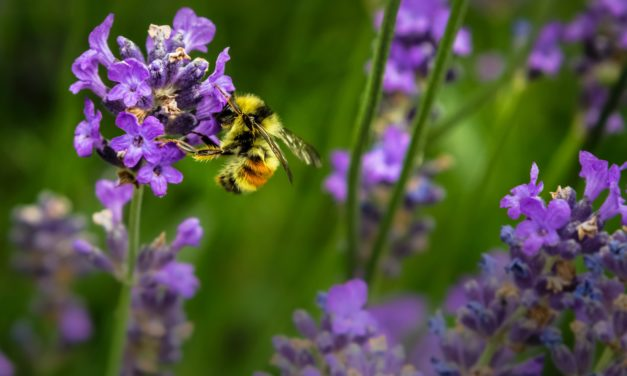 Air Pollution is Killing Honeybees, Scientists Reveal