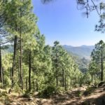 How Pine Needles Are Powering Homes in The Himalayas