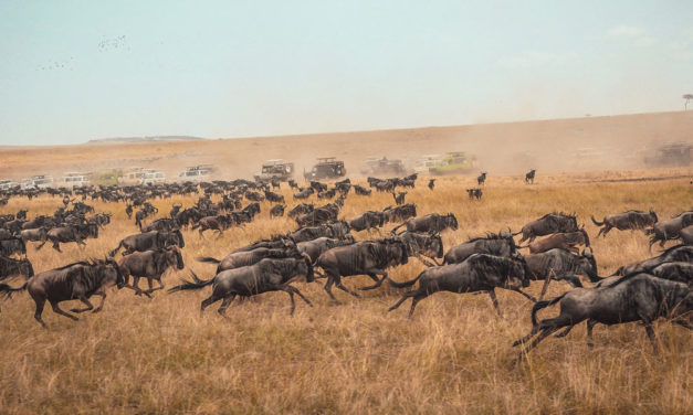 Human-Induced Climate Change Threatens Animal Migration